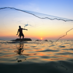 To Catch Uhu, Be an A'ama: Traditional Hawaiian Fishing Methods