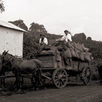 A Historical Timeline of Coffee in Hawai'i