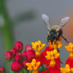 The Birds and the Bees: Let's Talk Pollination
