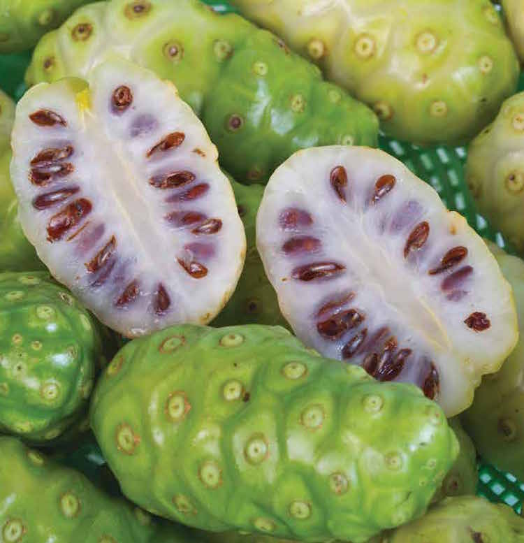 noni fruit are fruit stickers edible