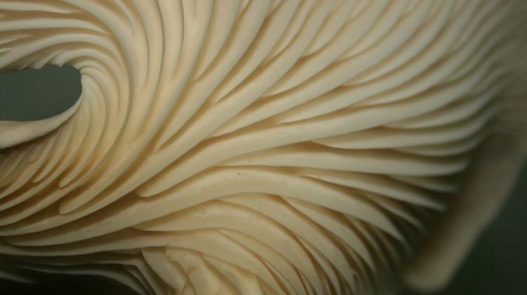 Hamakua Mushrooms, Big Islands, Hawaii