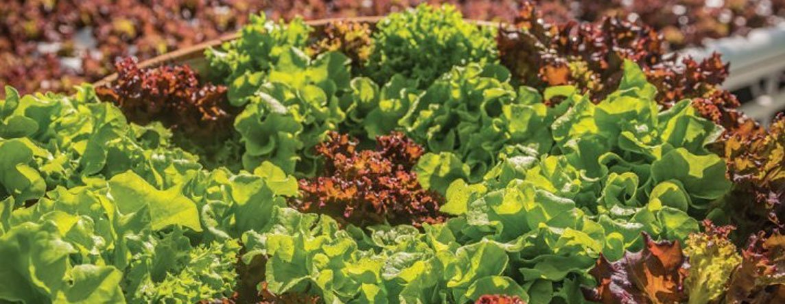 Hydroponics and Aquaponics | edible Hawaiian Islands Magazine